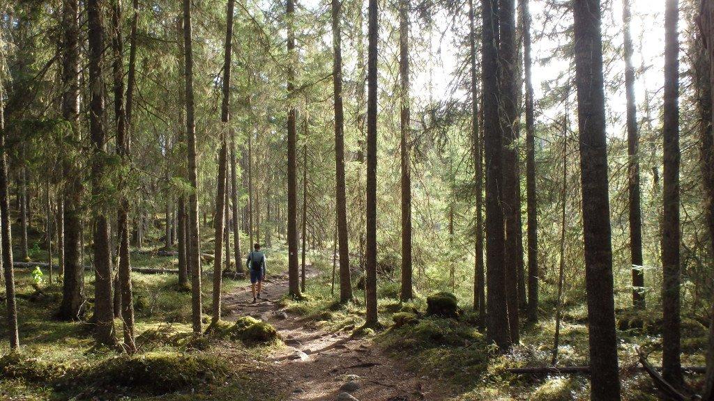 Randonnée dans Pyha-Hykka